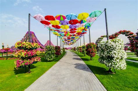 World Largest Flower Garden Dubai Miracle Garden World S Flower Garden