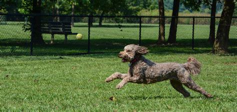 puppy park armleder park great parks of hamilton county