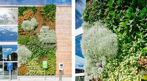 Klimplant Voor Binnen by Free Binnen N Buiten With Klimplant Binnen