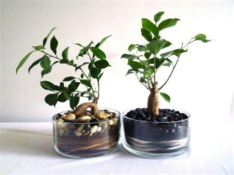 kleine zimmerpflanzen moderne zimmerpflanzen als frische deko f 252 rs zuhause