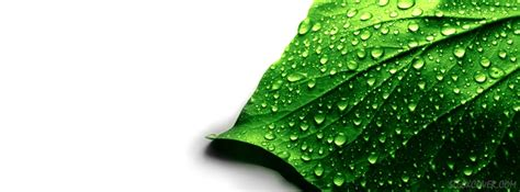 Green Covers by Green Leaf Cover