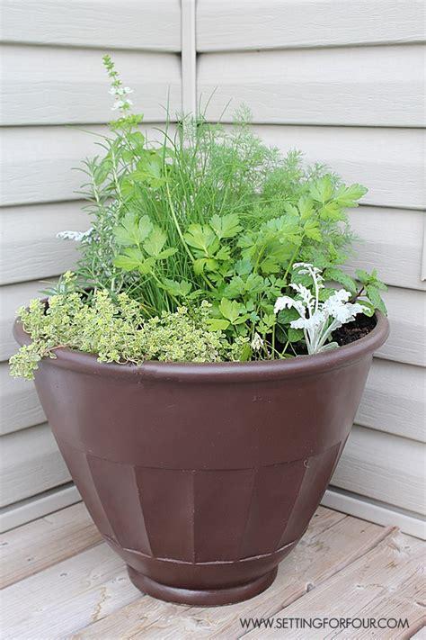 winter herb garden outdoor how to plant an outdoor herb garden pot setting for four