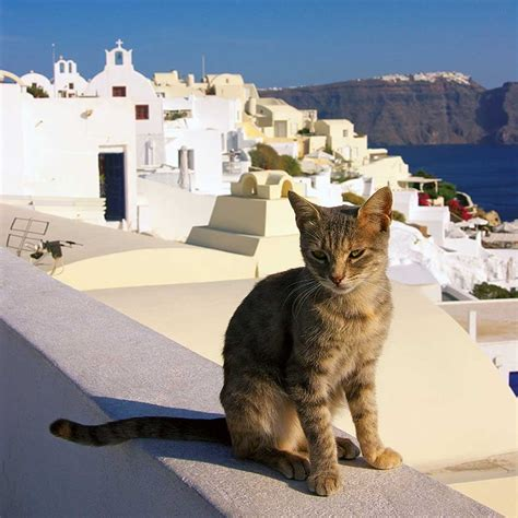 wall calendar 2018 cats of greece books cats island 2018 wall calendar 9783960132899