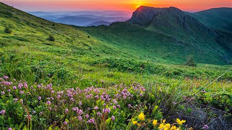 landscape mountain meadow  flowers  green grass