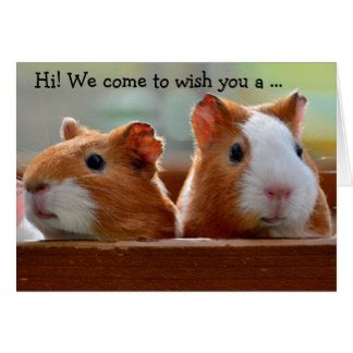 Happy Birthday Guinea Pig Card Pig Gifts On Zazzle