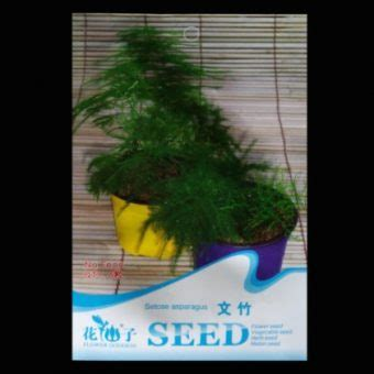 Harga Bibit Asparagus jual bibit benih setose asparagus bibitbunga