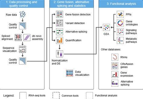 rnaseq workflow rna seq analysis bioinformatics software tools omictools