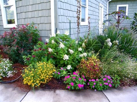 shrubs for flower beds beautiful plants for flower beds house