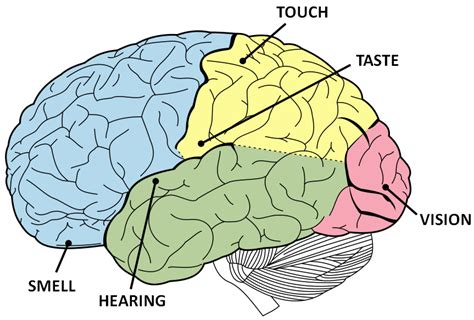 synesthesia how does your name taste the brain bank
