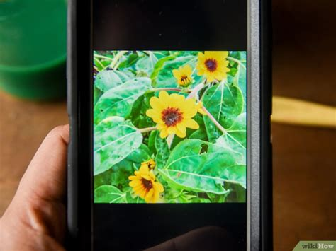 cmo pintar 27 pasos con fotos wikihow c 243 mo pintar un girasol 13 pasos con fotos wikihow