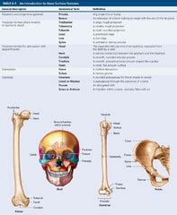 osseous tissue  bone structure flashcards quizlet