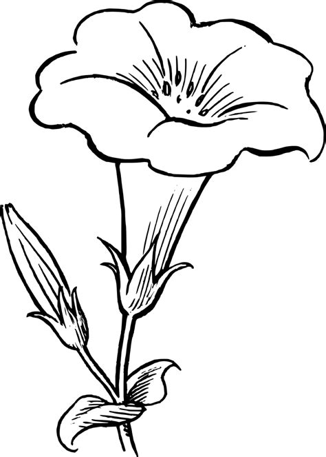 Wild Orchid Home Decor by Flower Clipart Black And White Clipartion Com