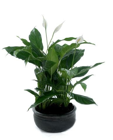 live indoor plants live indoor plants plantpeople