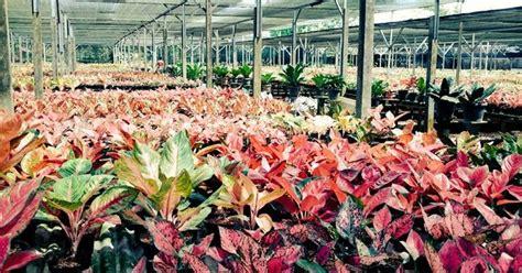 sewa tanaman landscape daftar harga tanaman hias