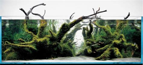 driftwood aquascape design 356 best images about aquascapes on pinterest fish tanks