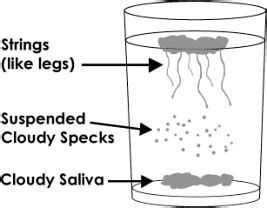 Stool Test For Candida Overgrowth by Candida