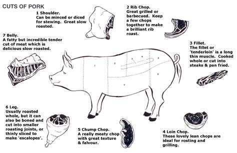 pig diagram 1000 images about so this is what a vagaina looks like
