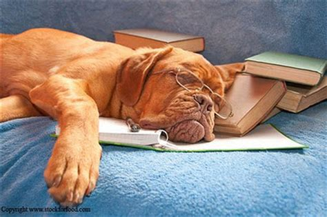 why is my puppy so tired why is everyone so darn busy and tired weekly columns bruce sallan