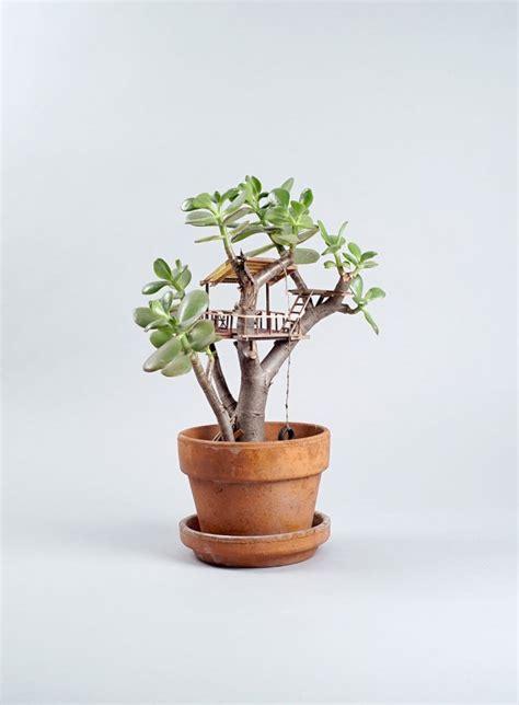 tiny indoor plants des petites cabanes dans des plantes d int 233 rieur