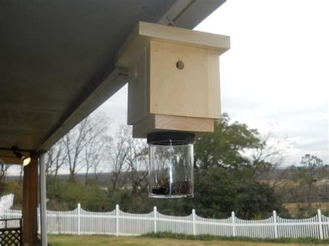 carpenter bee house top 3 carpenter bee traps best wooden traps and a sticky one