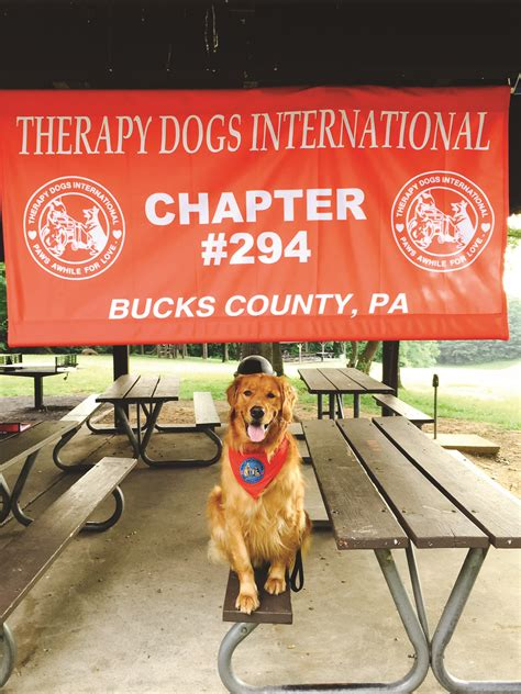 therapy dogs international therapy dogs international spreading benevolence through canine companionship