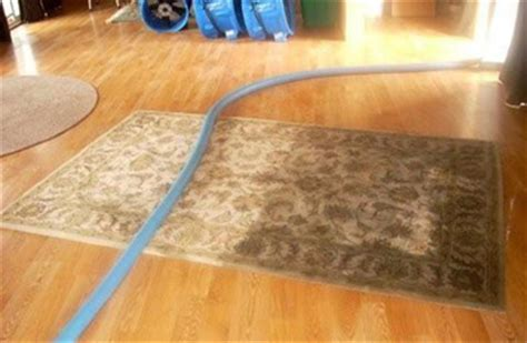 can you steam clean area rugs merle s steam clean carpet cleaning bemidji and grand forks specializing in water and