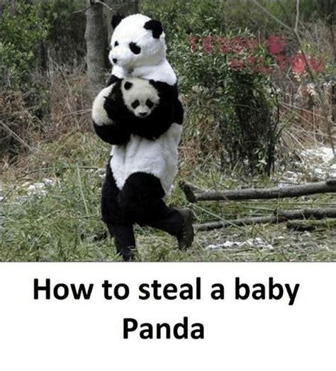 panda meme panda memes