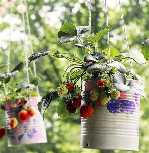 Hanging Strawberry Planter by 9 Unbeatable Diy Ideas For Growing Strawberries In A