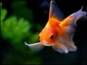 le poisson poissons