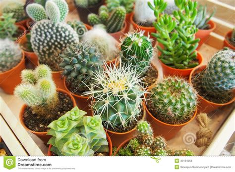 variety of succulent plants stock photo image 45194558