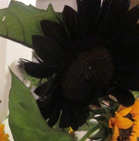 black sunflowers elizasmom com