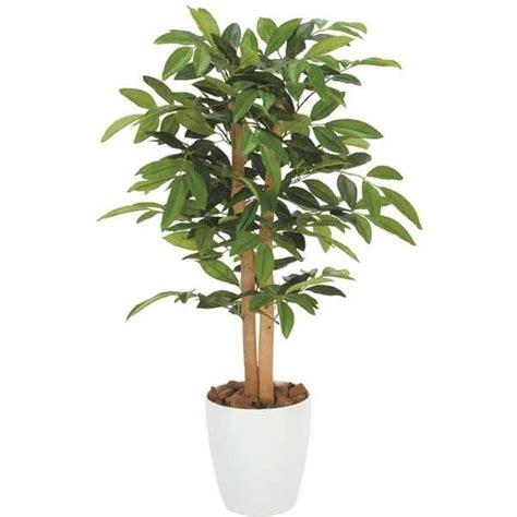 alberi da appartamento piante ornamentali finte piante finte piante
