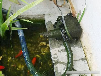 Pompa Air Mini 2 Tak kolam kecil untuk halaman kecil kus