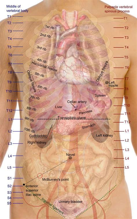 167 best tempat untuk dikunjungi images on abdominal muscles abs and anatomy