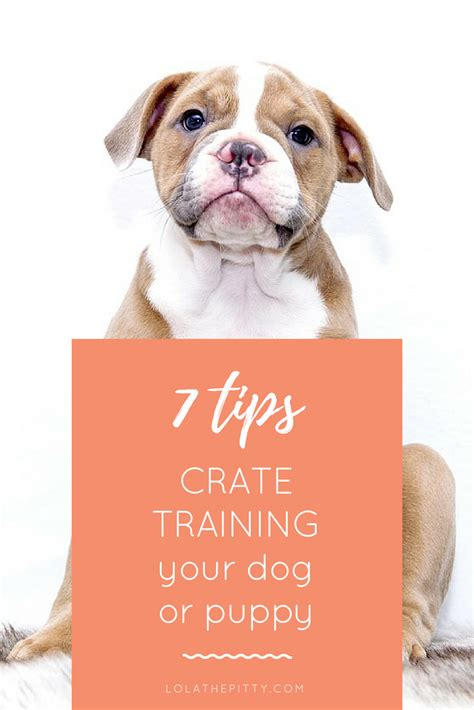 puppy crate tips 7 tips for crate your or puppy lola the pitty