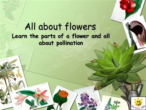 powerpoint tutorial ks2 plants flowers and pollination powerpoint by bevevans22
