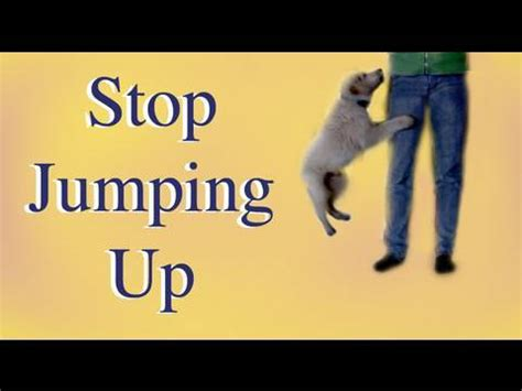 how to stop my puppy jumping on the sofa how to stop your puppy jumping up youtube