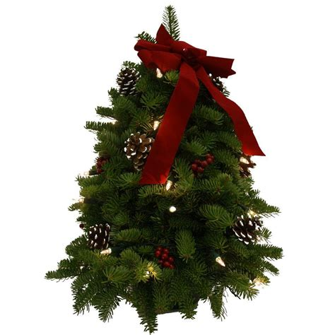 fresh cut tabletop tree worcester wreath 18 in balsam classic fresh cut fresh pre lit tabletop tree arrangement