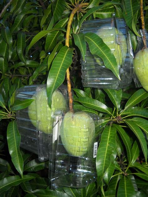 keep squirrels fruit trees how to keep squirrels and birds from your fruit