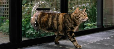 Cat Door In Glass Can I Install A Cat Flap In A Glass Door