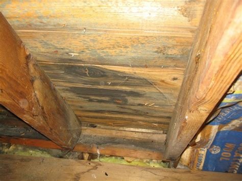 buying a house with mold in attic mold facts facts about mold cmi