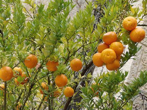 Orange Garden by Israel Garden And Landscaping