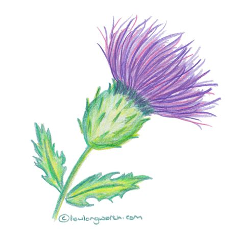 thistle color thistle color thistle scottish thistle color of your world