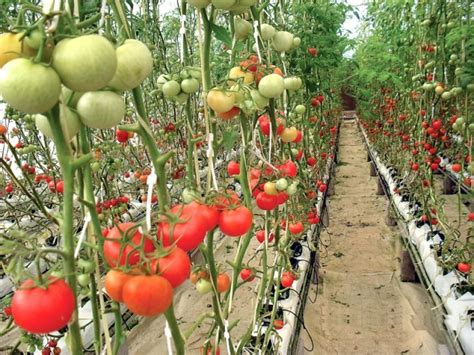 Oak Trellis High Tech Agriculture The Extraordinary Profits Of