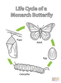 Life Cycle Of A Monarch Butterfly Coloring Page Free Butterfly Cycle Coloring Page