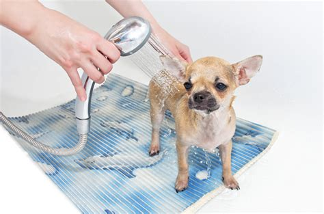 when should you start a puppy why you should start grooming your puppy from an early age