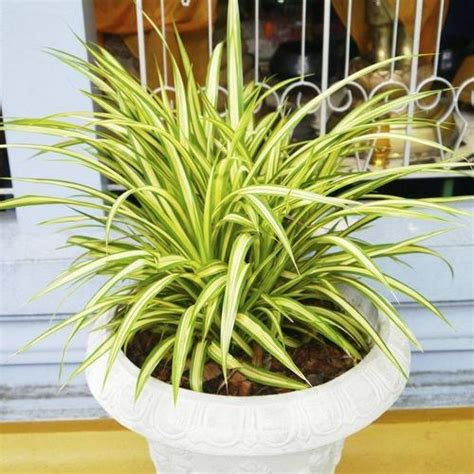 plantes 224 croissance rapide ooreka