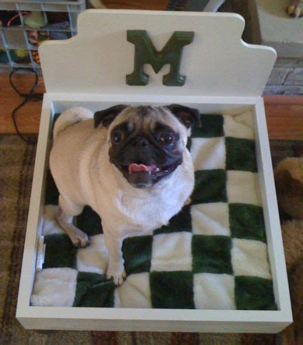 pug puppy bed mabel the pug in new bed make a custom bed for your pet creative