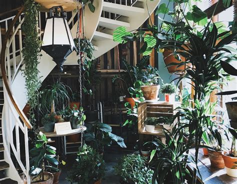home decor plants 6 insta worthy indoor plants to freshen up your home decor