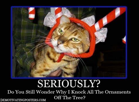 Funny Christmas Cat Memes - friday funny christmas humor ilife journey
